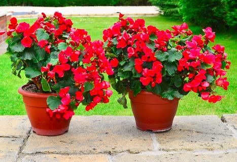Todo sobre las plantas en maceta: consejos de jardinería …