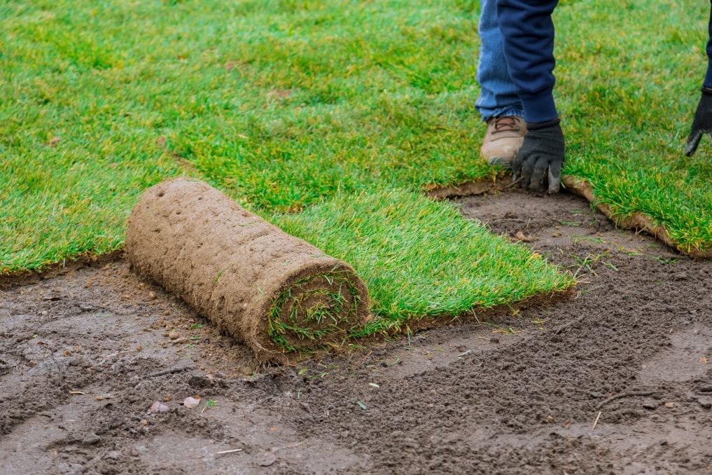 Cómo plantar tu césped: Lo que debes saber